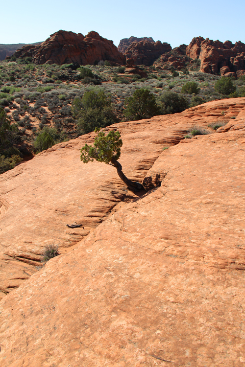 Snow_Canyon_State_Park_March_2013_near_St_George_UT_USA_Petrified_Sand_Dunes_Trail